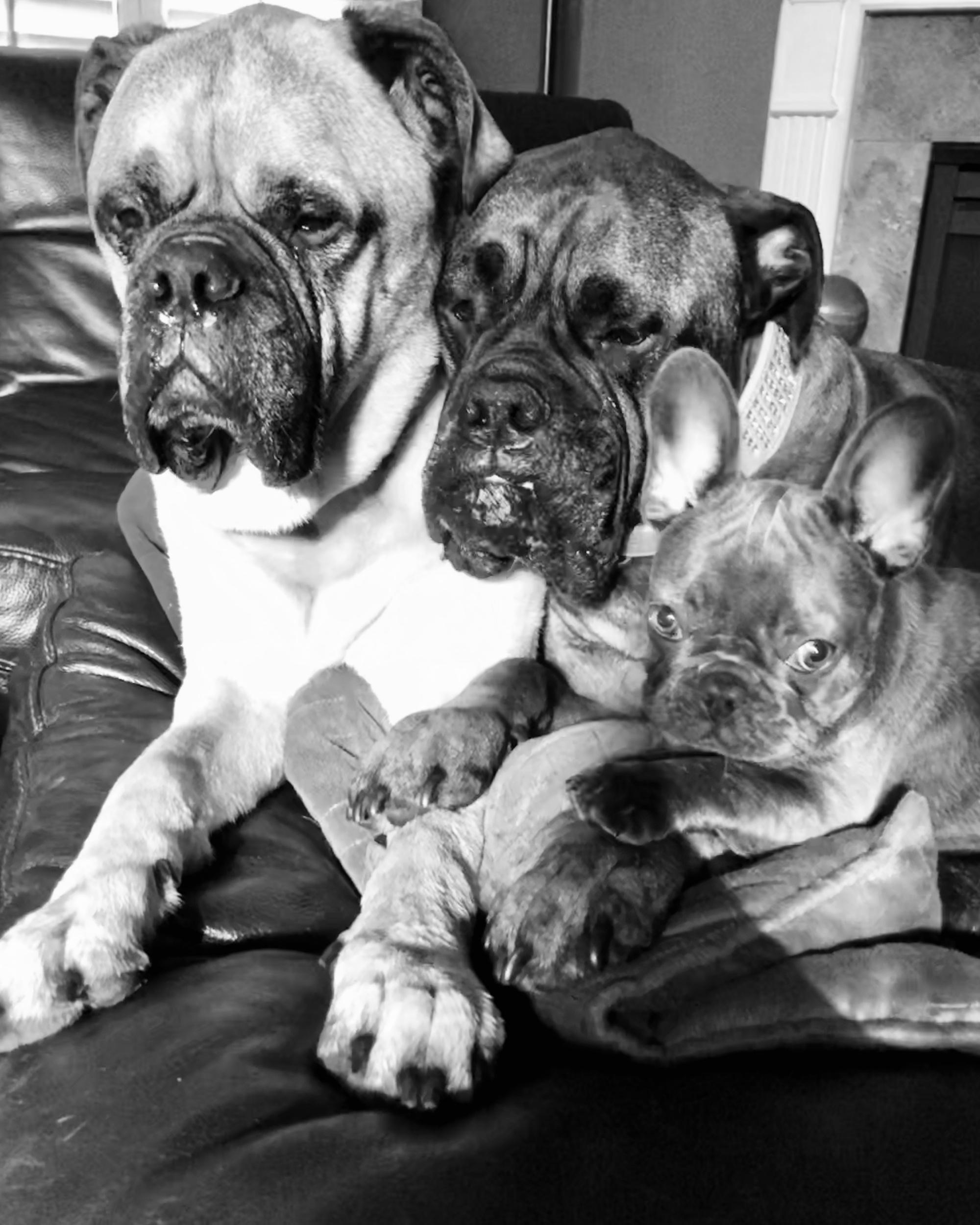 Pups Resized 1 (1)